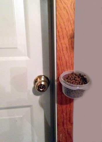 Dog Food Door