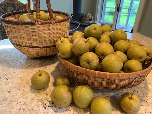 2 baskets of asian pears