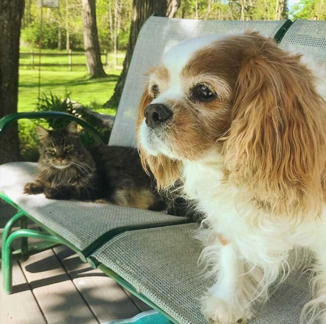 cat and dog on porch glider